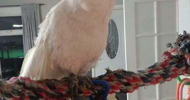 Eleanora Cockatoo looking for love